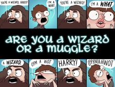 I'm a Muggle-Born wizard/witch! What are you?