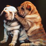 Find images and videos about cute, animals and dogs on We Heart It - the app to get lost in what you love. Shar Pei Puppies, Cute Puppies, Dogs And Puppies, Cachorros Shar Pei, Pet Dogs, Dog Cat, Doggies, Wrinkly Dog, Chinese Dog