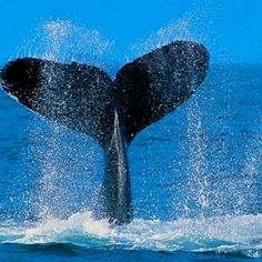 Have got to see Whales from a boat tour! I've seen them from the shore in Hawaii, but that wasn't close enough.