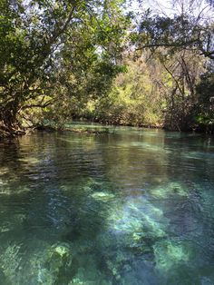 Weeki Wachee River Florida [2448x3264] Itzvolt http://ift.tt/2pK7xIu April 29 2017 at 07:52PMon reddit.com/r/ EarthPorn