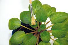 Čo potrebujú jednotlivé druhy izbových rastlín, aby sa im darilo? Plant Leaves, Plants, Plant, Planets