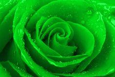 Linux Mint 17.3 'Rosa' | #Linux #Mint #Rosa