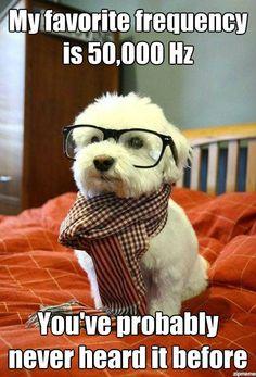 Nerd Dog got jokes