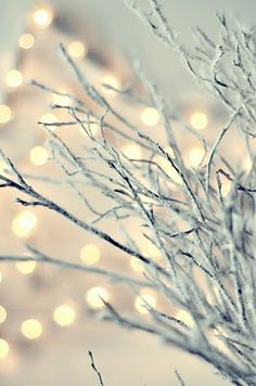 Twinkling winter branches and bokeh fairy lights