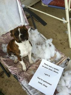 The best of dog shaming (click image to see full gallery)