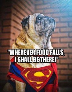 dog memes / funny dog memes #dogmemes #funnydogs