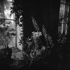 black and white photography, fine art photography, flower photography, holga photography, large wall art, large photo print, home decor