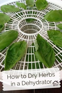 Ummm do I need a dehydrator? This is an honest question. How to Dry Herbs in a Dehydrator Canning Food Preservation, Preserving Food, Dehydrated Vegetables, Dehydrated Food Recipes, Plat Vegan, Home Canning, Canning Tips, Survival Food, Survival Tips