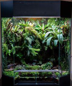 Biotope Aquarium, Gecko Terrarium, Decoration Plante, Paludarium, Reptile Cage, Weird Creatures, Horticulture, Reptiles, Container Gardening