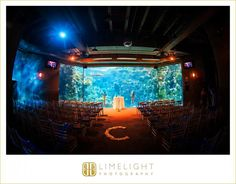 Limelight Photography, www.stepintothelimelight.com, The Florida Aquarium, Blue and Green wedding, Ceremony Set-up