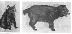 Kat - hond experiment