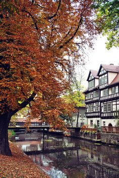 Thüringen, Deutschland (Germany) — Erfurt/This is how I imagine autumn looks in fairy tales Oh The Places You'll Go, Places To Travel, Places To Visit, Visit Germany, Germany Travel, Cities In Germany, Famous Places, Travel And Tourism, Wonders Of The World