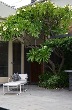 Patio contemporáneo con jazmín Magno (o Plumeria) Modern Landscape Design, House Landscape, Modern Landscaping, Landscaping Plants, Corner Garden, Side Garden, Small Gardens, Outdoor Gardens, Patio Tropical