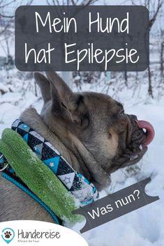 Diagnose Epilepsie beim Hund. Welche Formen der Krankheit es gibt und wie man sich das Management der Behandlung erleichtern kann. #epilepsie #hund #krankheit #behandlung #gesundheit #hunde Collie, Beagle, Good Fellows, Image Categories, French Bulldog, Fitness, Dogs, Animals, Animal Clinic