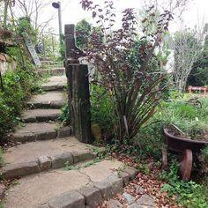 ウチの階段は愛犬コーギー(2年前に亡くなった)が楽に上がれるように作ったモノ♪僕らが歳を重ね足元おぼつかない頃もこれで楽チン(笑) #階段#アプローチ#老後でも楽チン#アメリカテマリシモツケディアボロ #銅葉 #丘#ガーデニング#お庭作り