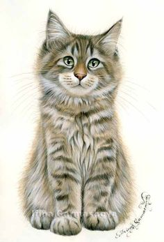 Maine Coon kitten by Irina Garmashova