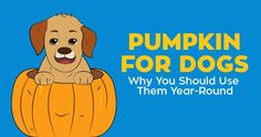 Turns out, pumpkin is not only for the month of October. Pumpkin for dogs offers major health benefits. Cheap Pet Insurance, Cat Insurance, Pet Health Insurance, Puppy Care, Dog Care, Healthy Pets, Exotic Pets, Dog Owners, Kittens Cutest