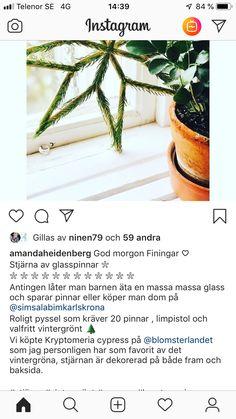 Advent, Plants, Instagram, Plant, Planets