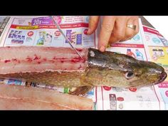 How to Fillet a Pike (and Get 5 Boneless Fillets!) - YouTube