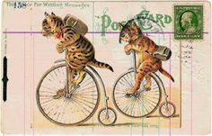 Free printable - Post card - card topper - cats riding bicycles.