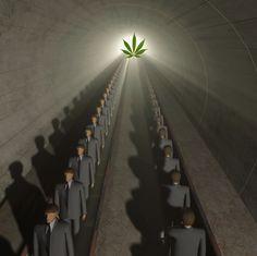 The Commercialization of Marijuana