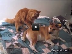 Dog gets a massage-- haha my cat does this too!