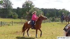 John Cena Horse