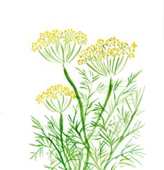 Dill art  print of  original watercolor painting by TheJoyofColor, $21.00