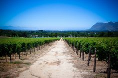 """Groot Constantia Vineyard (Cape Town)"" by Bertrand Duperrin"