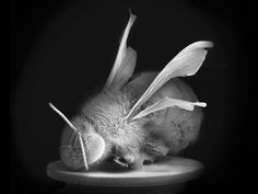 Anne Noble -- No Vertical Song Artistic Photography, Photography Poses, White Photography, Dead Bees, Contemporary Australian Artists, Art Folder, Contemporary Photographers, Studio Portraits, Double Exposure