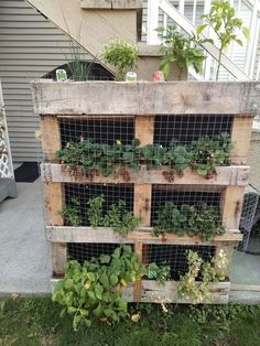 Another re-purposed pallet - this one with herbs, veggies and strawberries. Had to put wire in front as something was eating our strawberries during the night. No Time For Me, Strawberries, Pallet, Repurposed, Recycling, Veggies, Wire, Herbs, Outdoor Structures