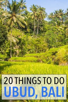 The best things to do in Ubud, Bali including how to avoid the crowds and make the most of your stay.