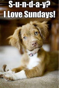 Can't resist a cute puppy picture! Happy Sunday everyone...Live your virtues of life! To an amazing week ahead with love and gratitude.