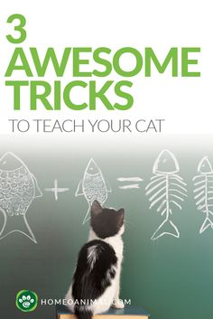 OK - I'd love to try this, if nothing else to get my cats to 'high five' (not each other!! with me!)