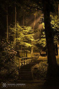 The Forbidden Pathway - #Nikon D7100