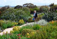 High and dry: South Australian water-wise garden