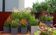 Williamsburg, Brooklyn Rooftop Garden, Modern landscape design, lightweight planters, ornamental grasses, full sun