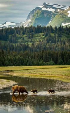 Bears (Lake Clark National Park, Alaska) [photographer unknown]