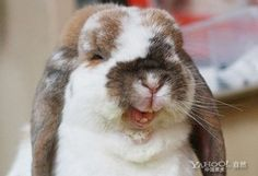 I hope Deana is laughing as hard as this bunny is.. just maybe with a little less fur on her face. :)