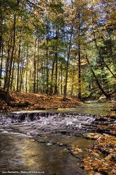 Just above Washboard Falls in Hamilton Ontario #DiscoverOntario #ExploreCanada #NatOnt