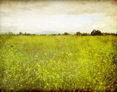 Landscape Photography - Flower meadow rustic nature wall art - chartreuse green decor - photography print - Mustard field on Etsy, € Landscape Photography Tips, Landscape Photographers, Fine Art Photography, Nature Photography, Photography Flowers, Landscape Walls, Landscape Paintings, Green Landscape, Olive Green Decor