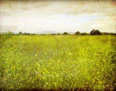 Landscape photograph flower meadow rustic wall art by LupenGrainne