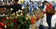 Shopping for Roses at an Outdoor Farmers Market