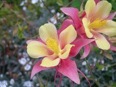 Flores, Torres del Paine.