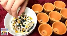 seed sorting activity for preschool