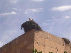 Amiche a Marrakech - Silvia's Trips