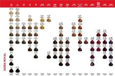 Igora royal color chart