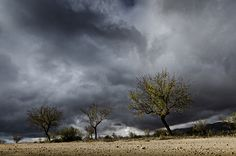 Storm Clouds, Almeria Province, Spain by Rob Palmer  On a photographic day trip with friends, we decided to head into northern Almeria Province in Andalucia, Spain. The area is surprisingly fertile and almond trees are very prevalent, including just a few that can be found on the side of arable fields, as here.  The time of year was November so... https://f11news.com/29/04/2017/storm-clouds-almeria-province-spain-by-rob-palmer