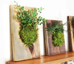 Fern and Moss Reclaimed Rustic Wood Hanging Flat by ArtisanMoss Moss Wall Art, Moss Art, Plant Wall, Plant Decor, Hanging Plants, Indoor Plants, Jardin Vertical Diy, Vertical Garden Diy, Decoration Plante