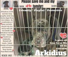 PULLED BY SECOND CHANCE RESCUE - 05/14/16 - TO BE DESTROYED 05/11/16 - ARKIDIUS